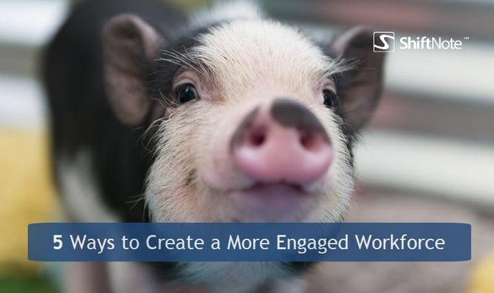 5 ways you pig.jpg